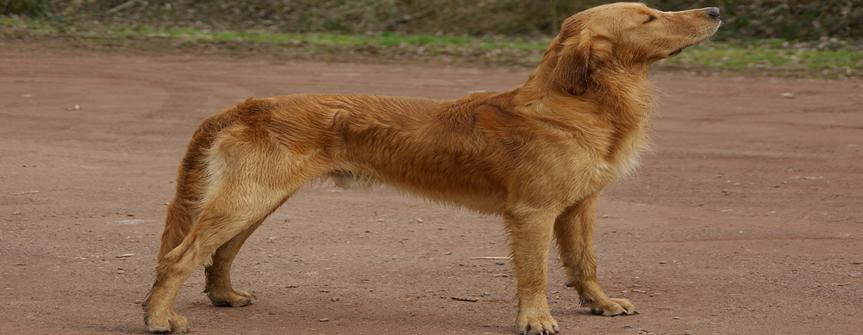 Schlanke Hunde haben eine höhere Lebenserwartung
