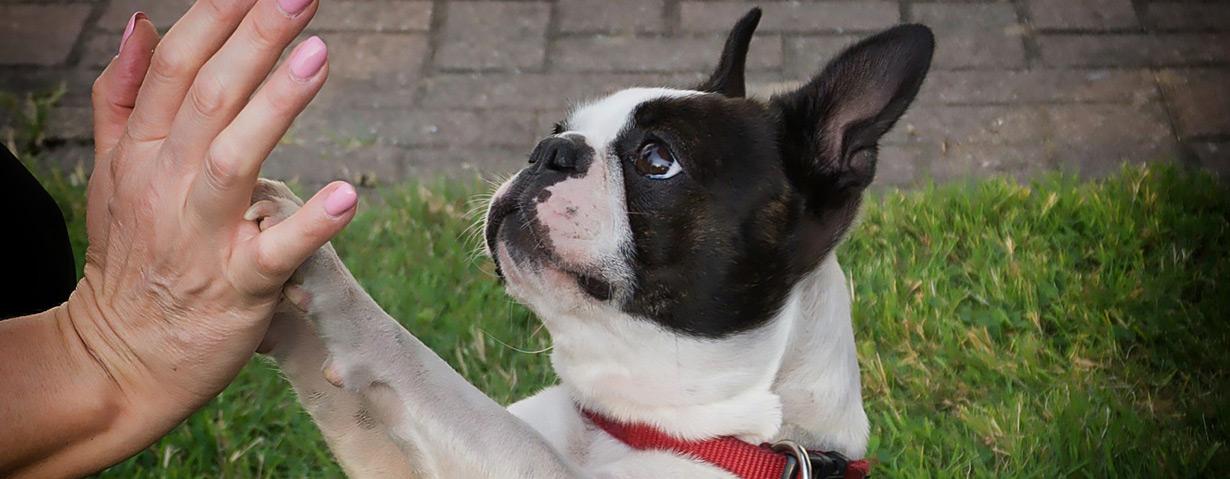 Physiotherapie für Hunde – PhysioPets erklärt die wichtigsten Therapieformen