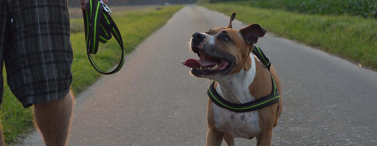 Hund Spazieren_1282866_1920