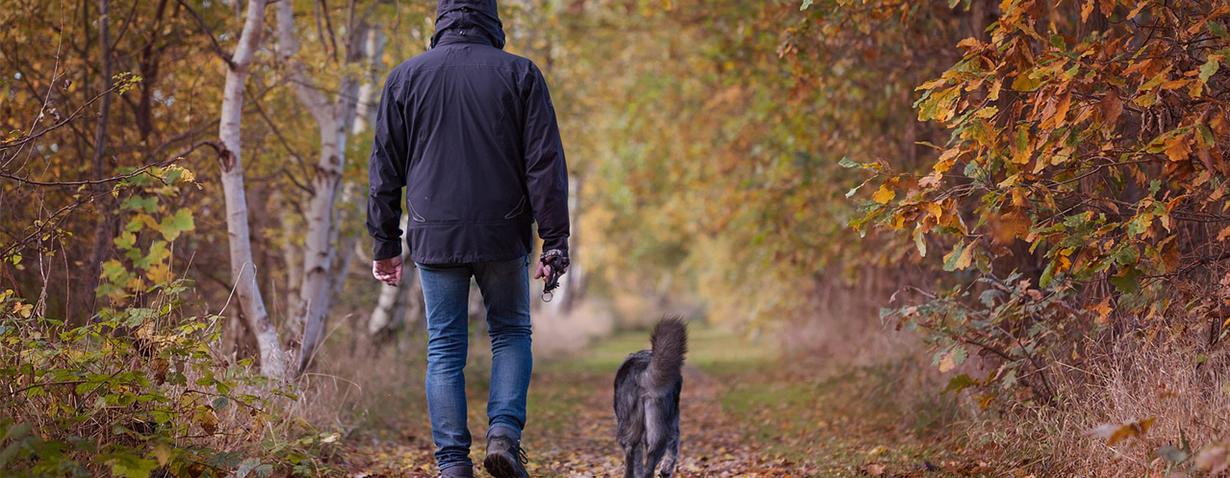 Hunde im Herbst_1792812_1280