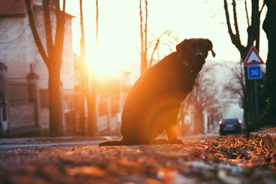Eine Hundehaftpflicht macht in jedem Fall Sinn