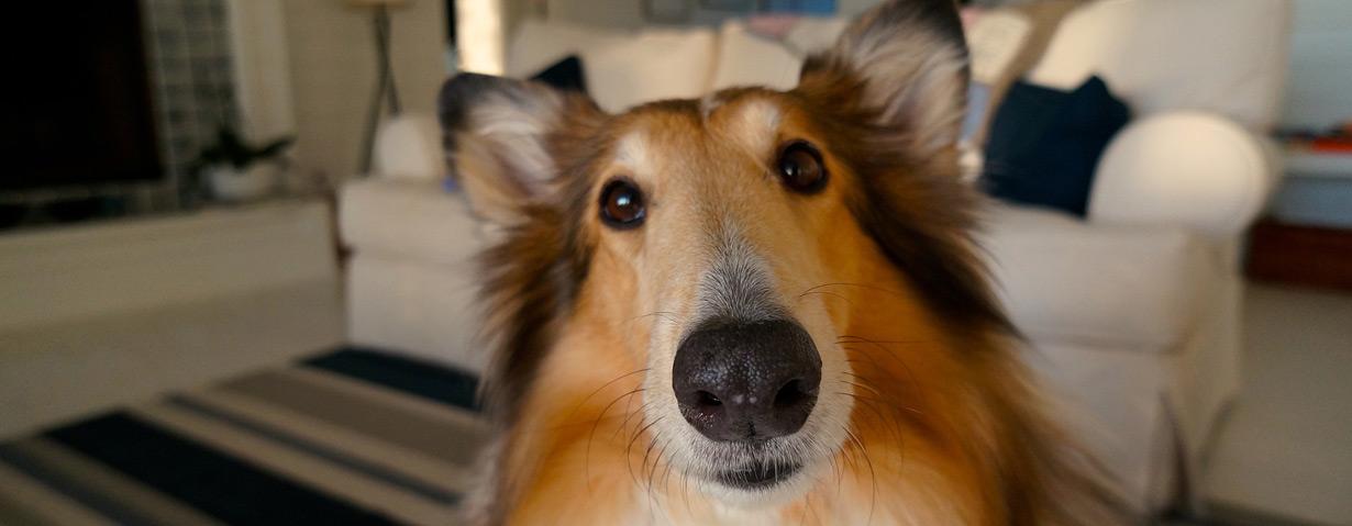 Eine Haftpflicht- und OP-Versicherung für Hunde macht durchaus Sinn
