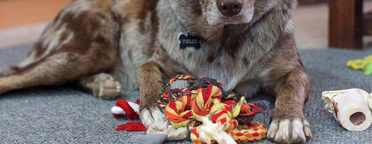 Hundespielzeuge selbst nähen – ein neuer Trend?