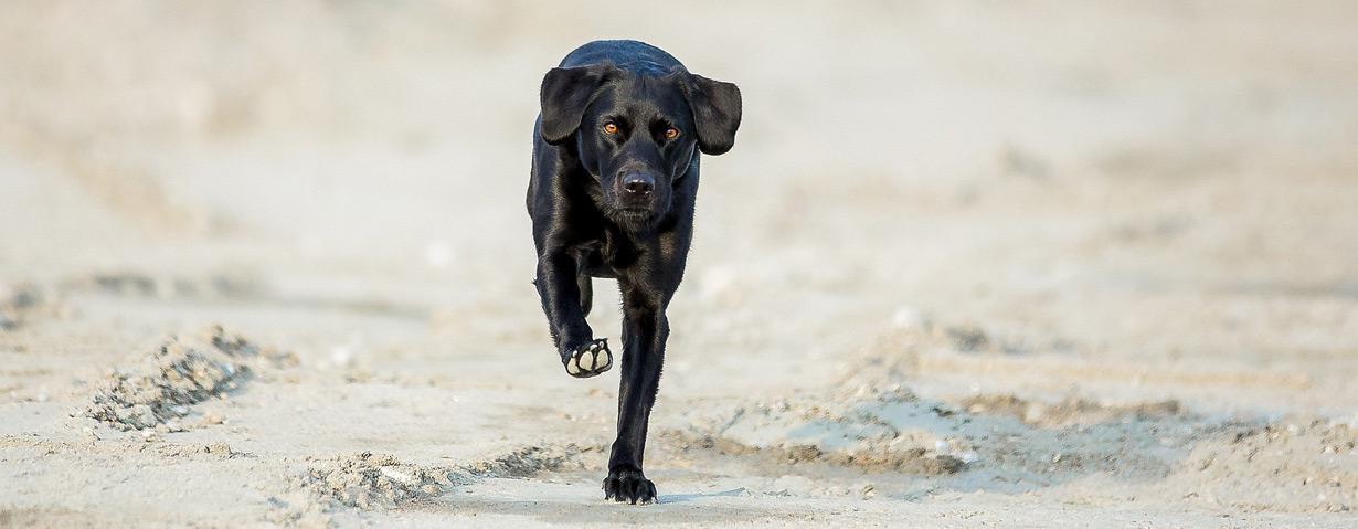 Ein Hund ist mehr als nur ein Haustier