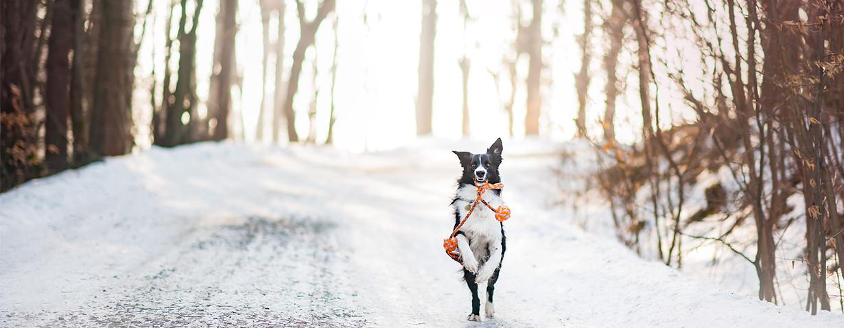 Hunde Winter