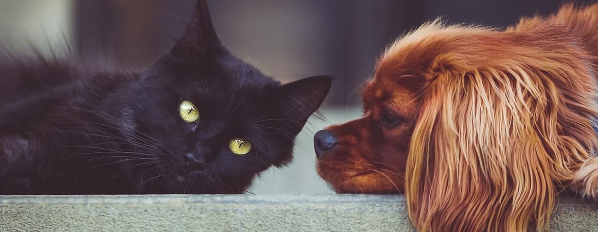 Zahnpflege bei Hunden und Katzen