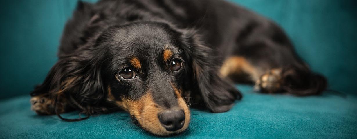 Nierenbeschwerden bei Hunden behandeln