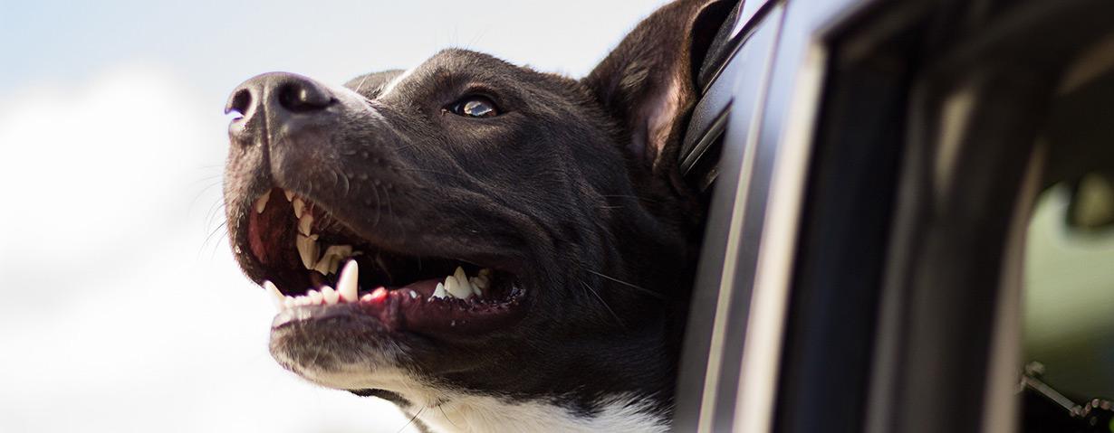 Hundetransport: 10 Tipps zur sanften Eingewöhnung