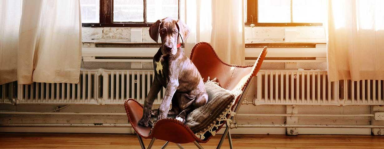 Bürohund macht attraktiv