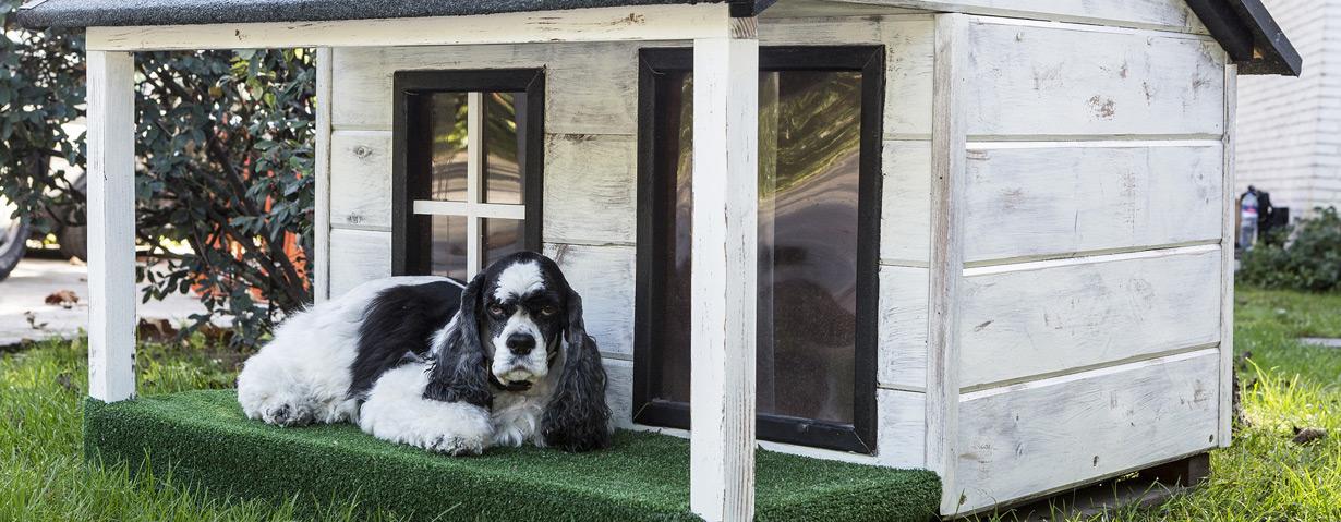 Hundehütte: Eigenheim für den Vierbeiner ganz einfach selber bauen
