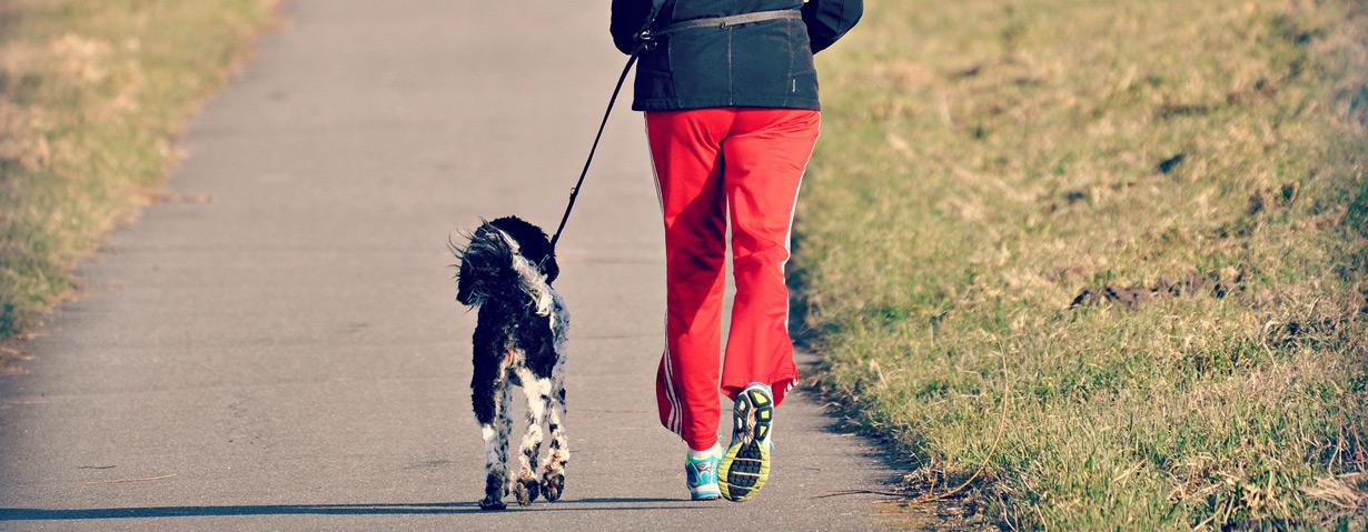 Ausdauertraining zusammen mit dem Hund