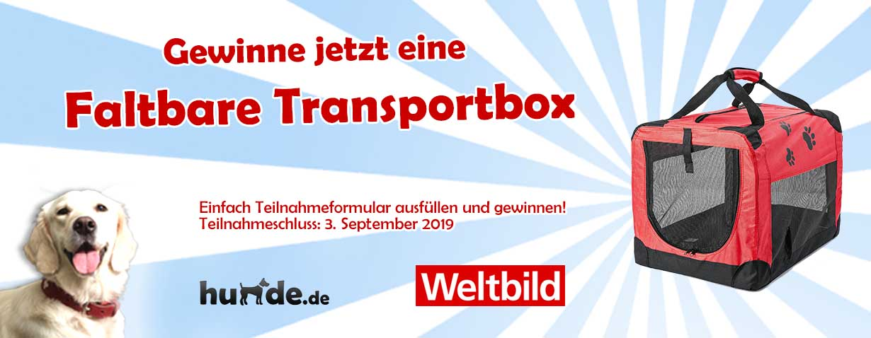 Faltbare Transportbox