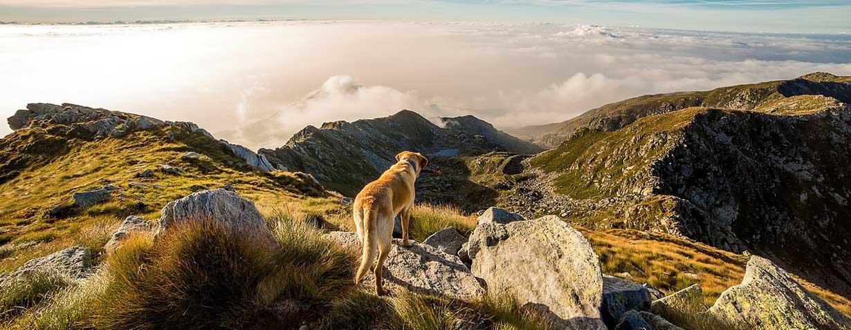 Hunde im Freien halten - Artgerecht oder Tierquälerei