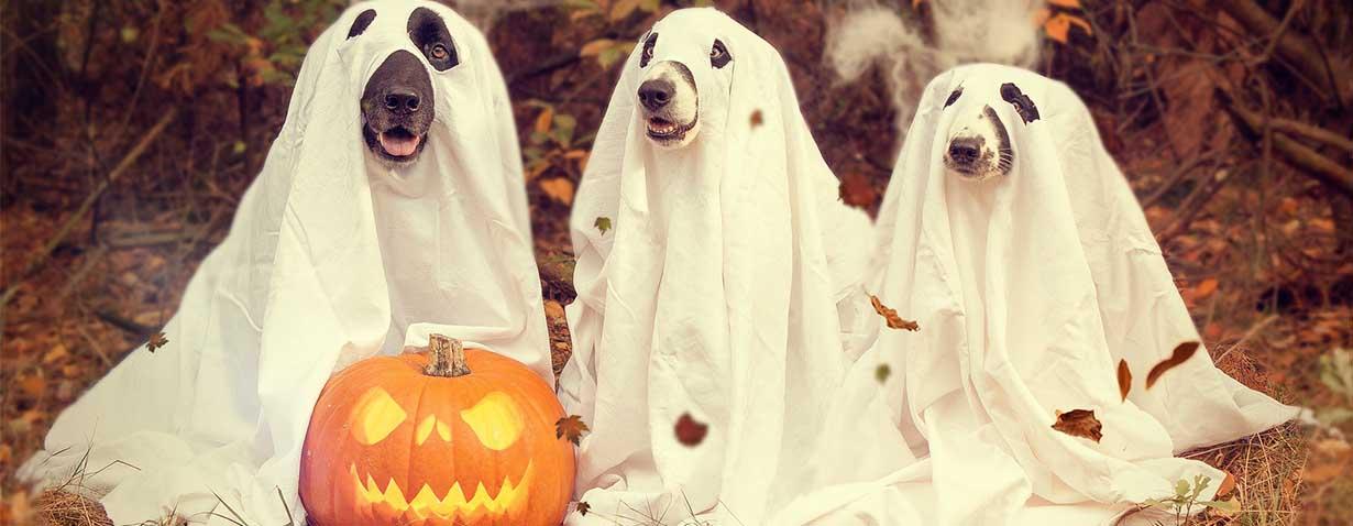 halloween-2870607_1920