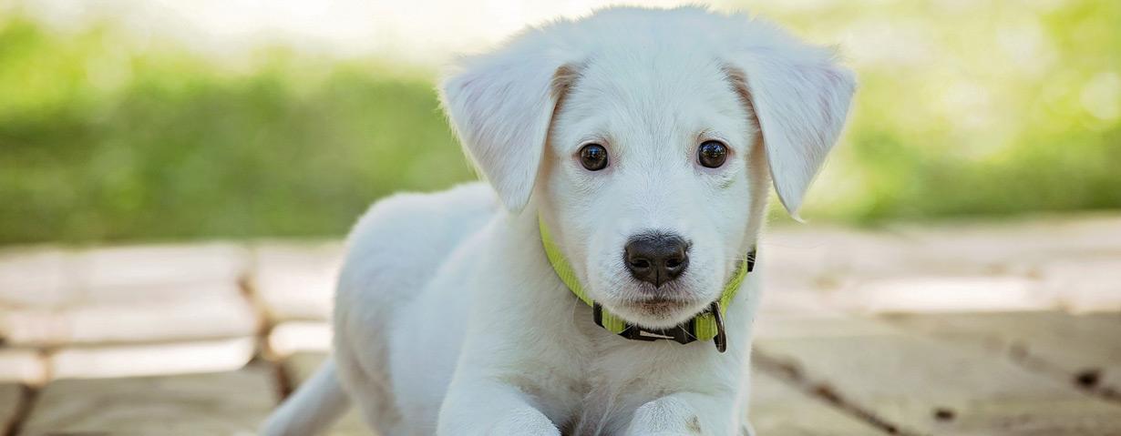 Ein Hund bedeutet viel Freude – aber auch Verantwortung