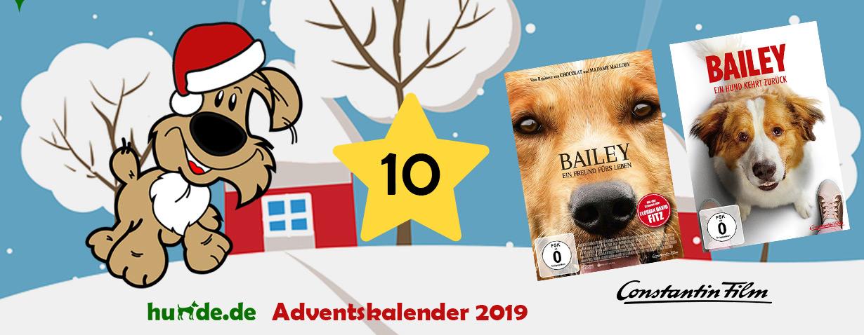 Bailey - Ein Freund fürs Leben, Bailey - Ein Hund kehrt zurück