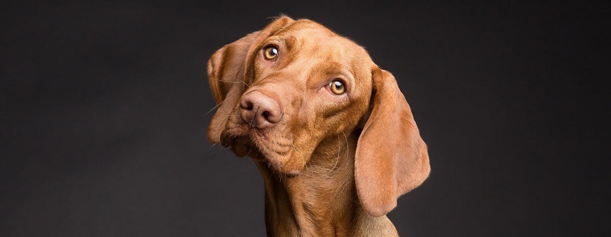 Gesunde Öle für Hunde – von Leinöl bis CBD