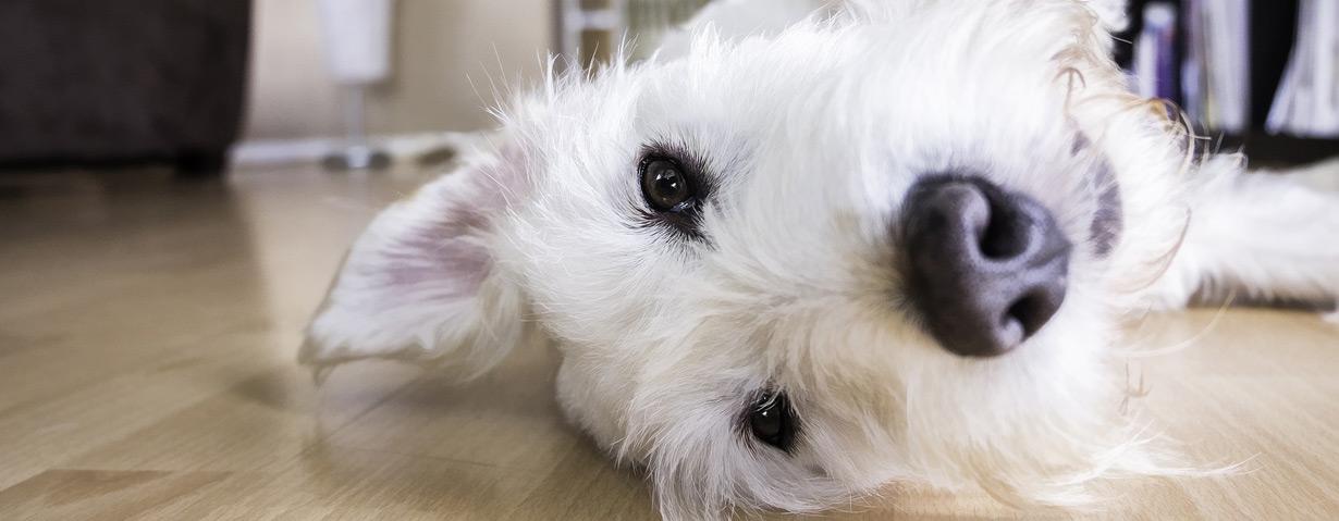 ]Warum Passivrauch auch für Haustiere gefährlich ist und welche Haustiere besonders betroffen sind