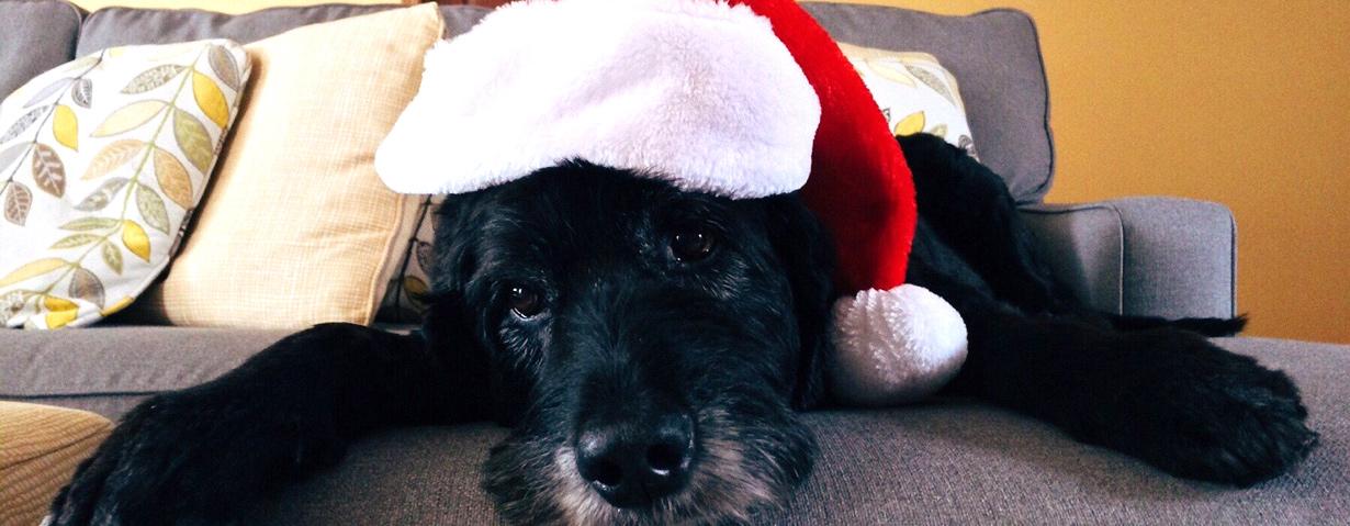 Die Weihnachtszeit auch für Hunde schön gestalten