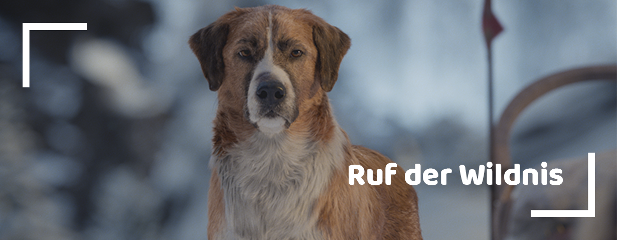 """Facebook-Gewinnspiel: Zwei Fanpakete für den Kinofilm """"Ruf der Wildnis"""""""