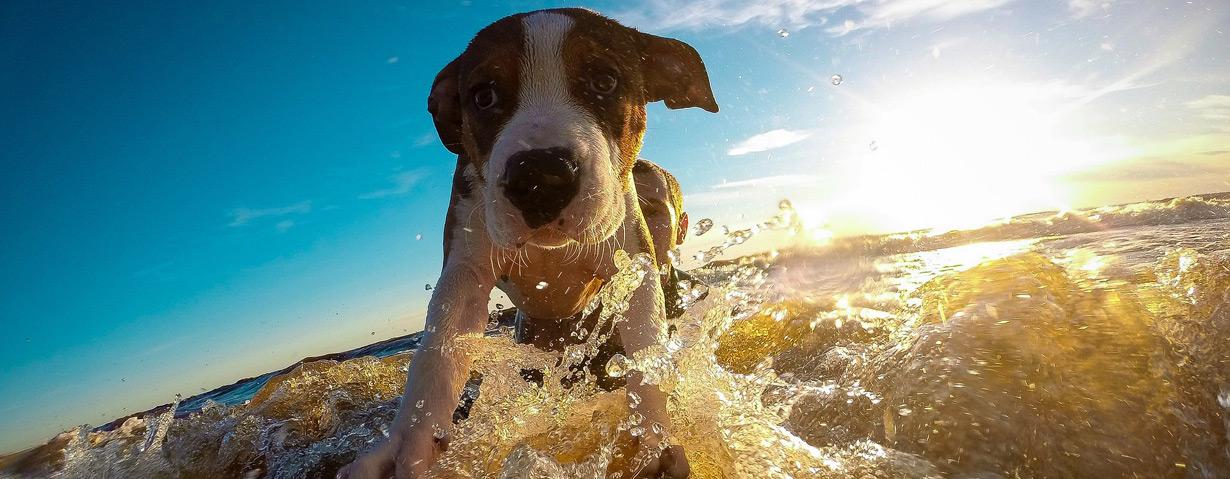 Mit dem Hund in den Urlaub fliegen