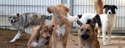 Das Leben mit Hund in Corona-Zeiten