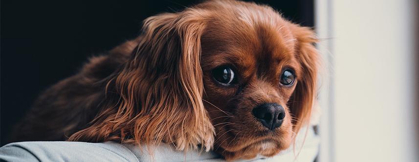 Was braucht man alles, wenn ein Hund ins Haus kommt?
