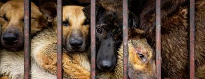 VIER PFOTEN fordert ein Verbot von Hunde- und Katzenfleischhandel in China