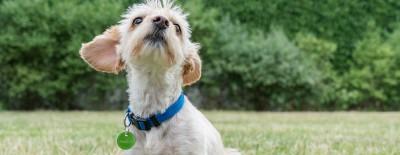 Haustierregister FINDEFIX für Tierhalter weiter erreichbar