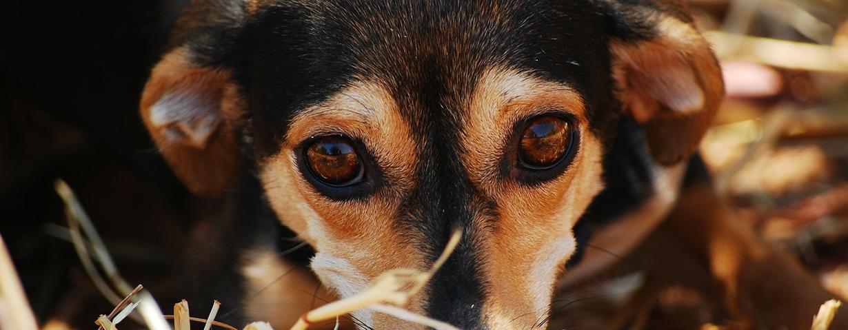 Corona-Hilfsmaßnahmen auch für Tierheime
