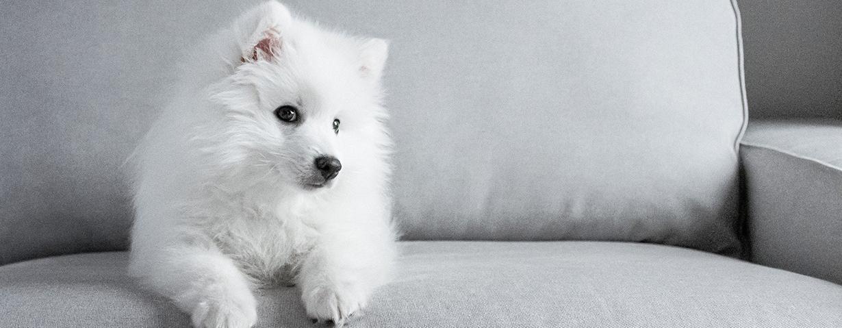 Hundeerziehung - klare Regeln für eine gute Mensch-Hunde-Beziehung