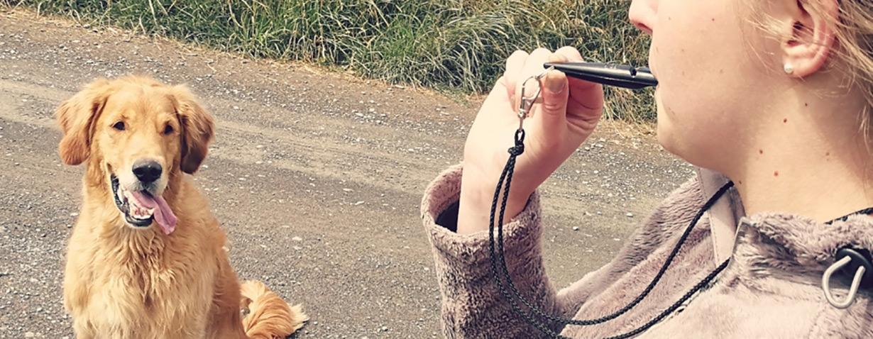 Hundeerziehung leicht gemacht – mit traditionsreichen ACME Pfeifen