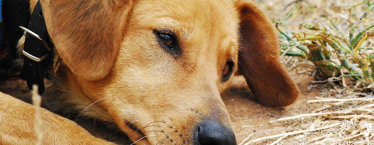 Finanzielle Belastung der Tierheime spitzt sich zu