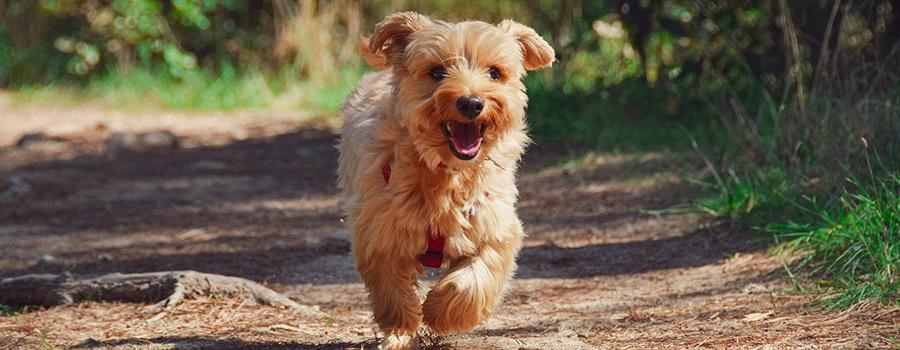 Kölner Hunde-Akademie stellt neue Angebote vor – auch für private Tierhalter