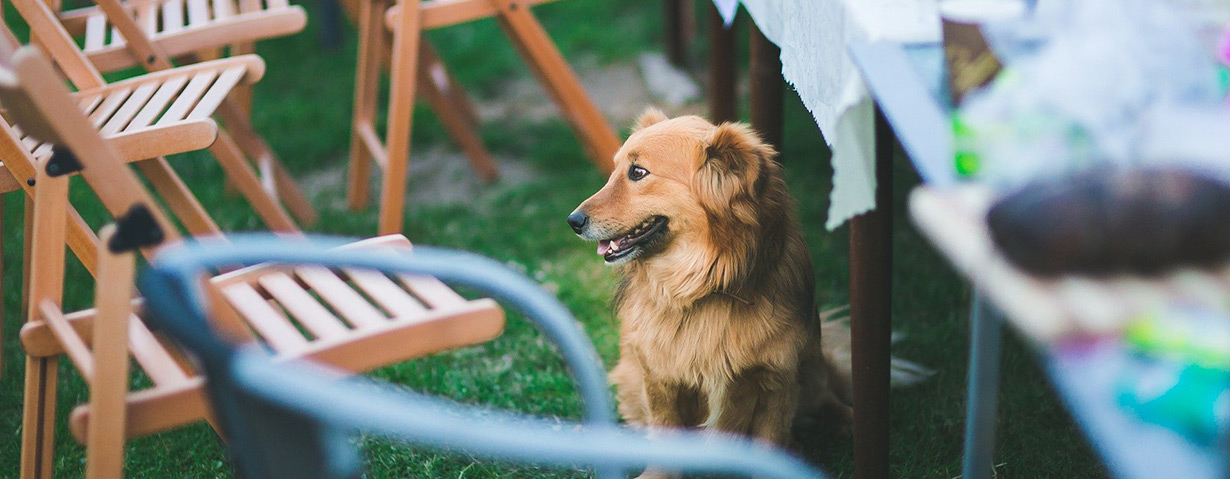 Darf man den Hund wirklich nicht vom Tisch essen lassen