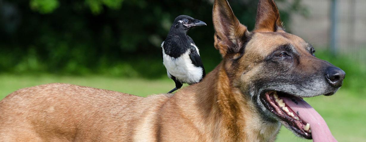 Jungvögel können wegen Hundehaar sterben