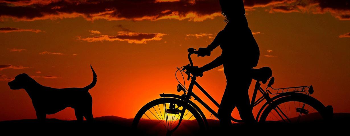 Hunderunde mit dem Rad: Was ist erlaubt?