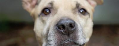 Häusliche Gewalt – auch Haustiere werden jetzt vermehrt zu Opfern