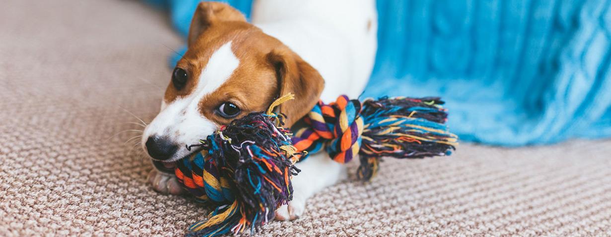 Tipps für frischgebackene Hundehalter: So machen sie ihre vier Wände welpenfest!