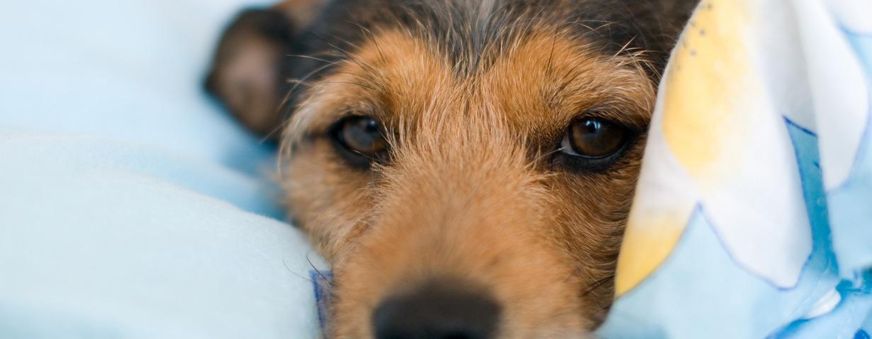 So fühlt sich dein neuer Hund bei dir wohl