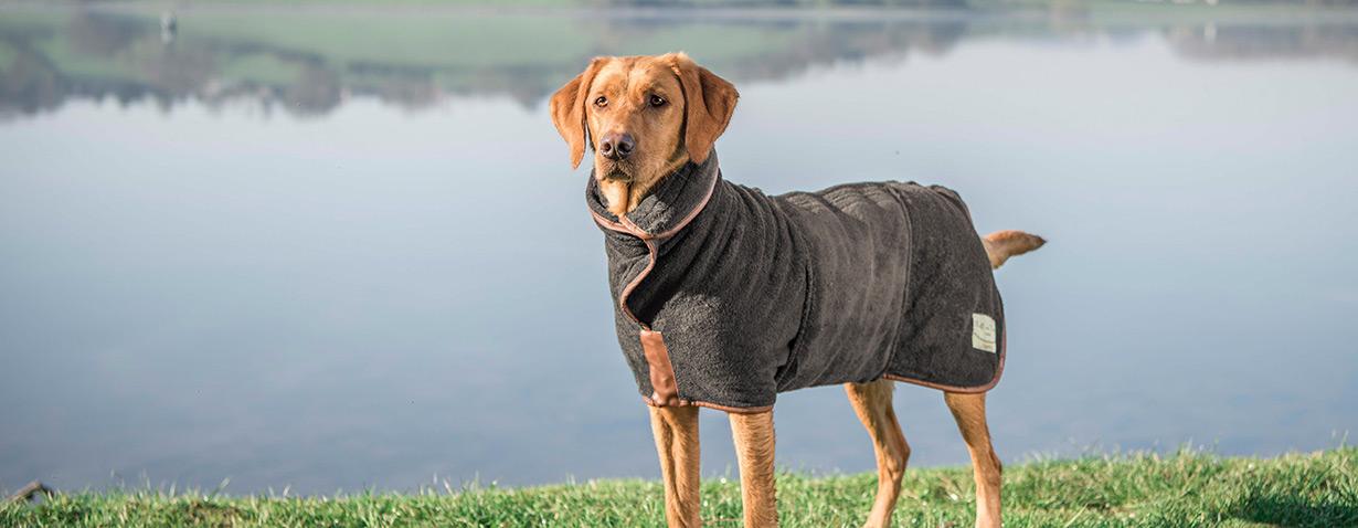 Tipps & Tricks für den Sommerurlaub: Wie die Reise mit Hund ein voller Erfolg wird