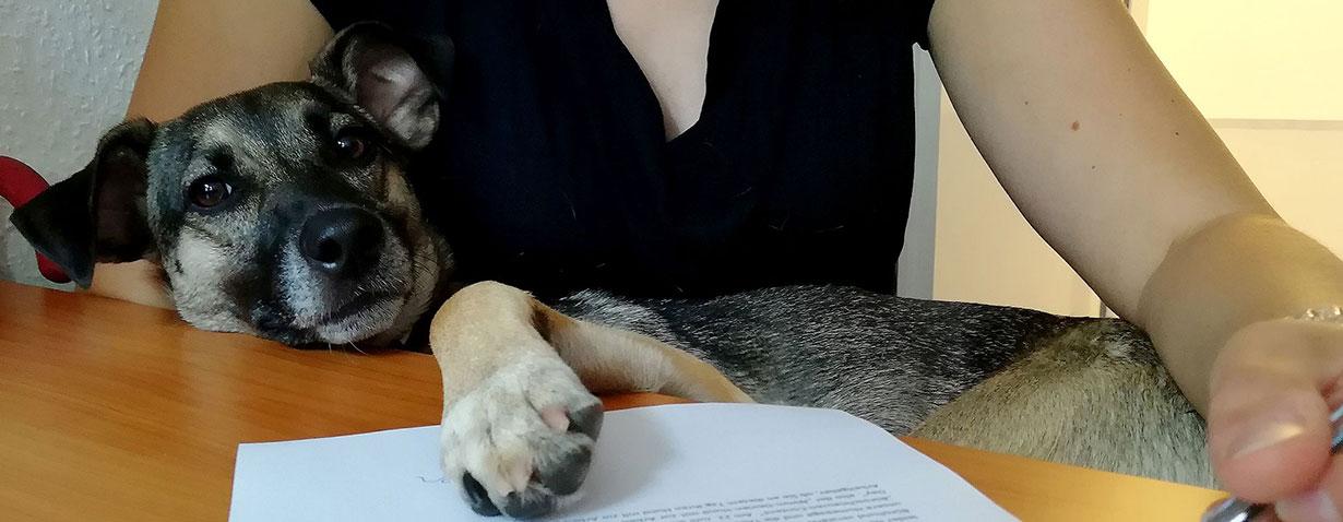 "Auch Bürohunde machen ""Homeoffice"""