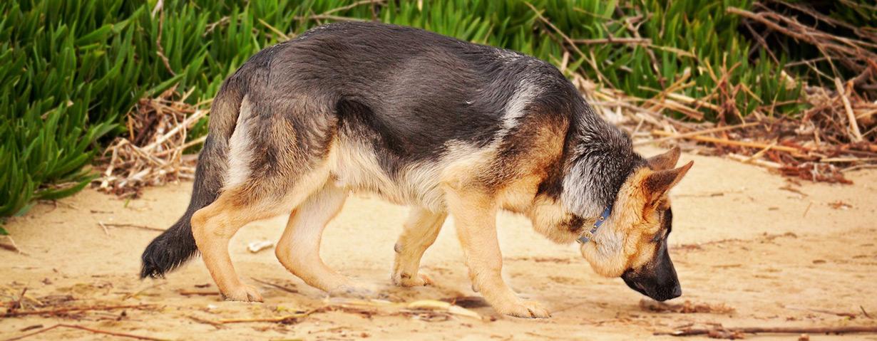 Hunde müssen schnüffeln dürfen