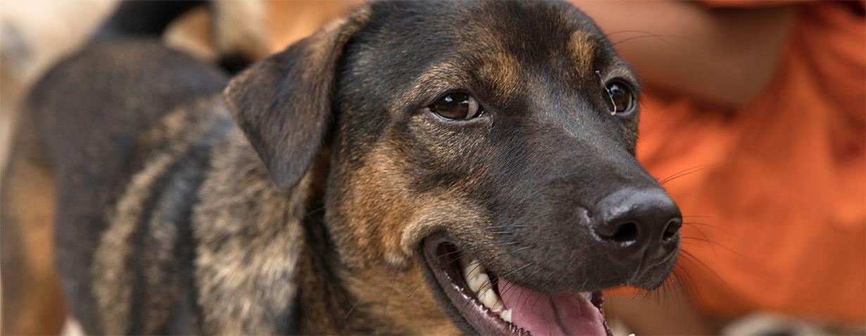 Siem Reap verbietet als erste Provinz Kambodschas Hundefleisch