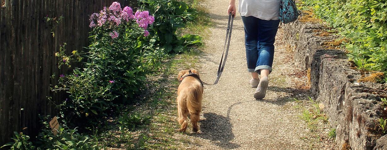 VIER PFOTEN Statement zur Änderung der Tierschutz-Hundeverordnung: Zu viele Tierschutzprobleme werden nicht berücksichtigt