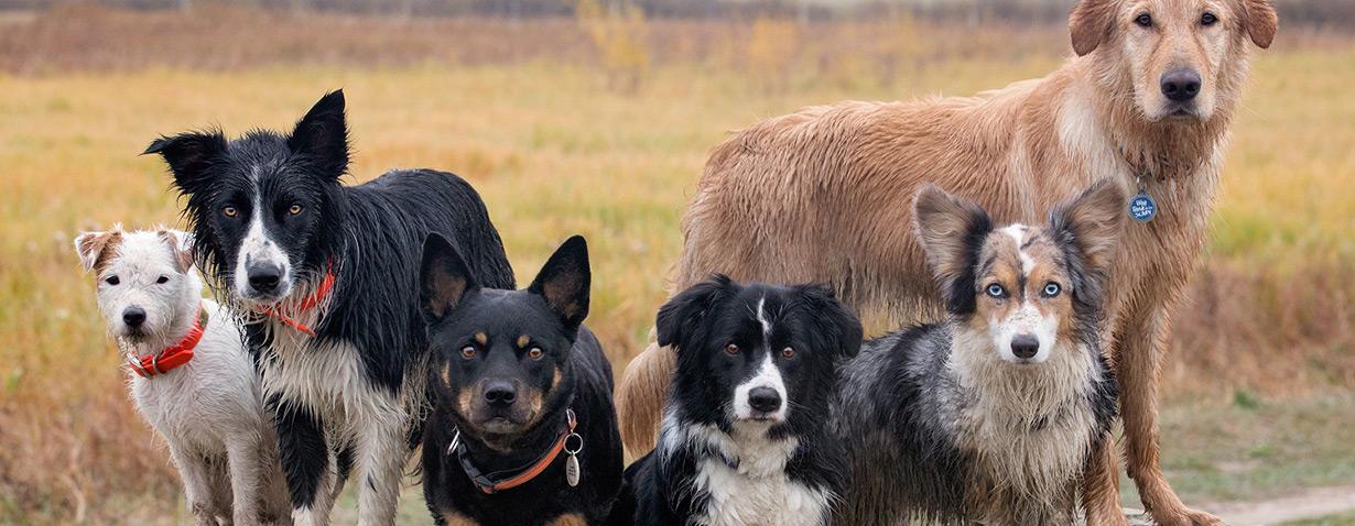 Charakter über Aussehen: Nach diesen Kriterien wählen die Deutschen ihre Hunde aus