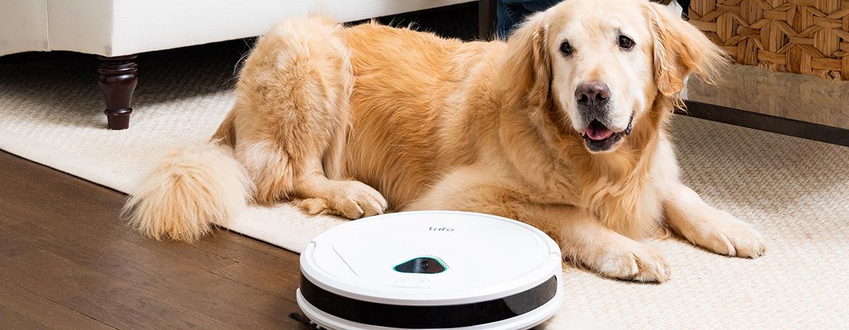 KI-unterstützter Roboterstaubsauger und digitaler Wachhund in einem