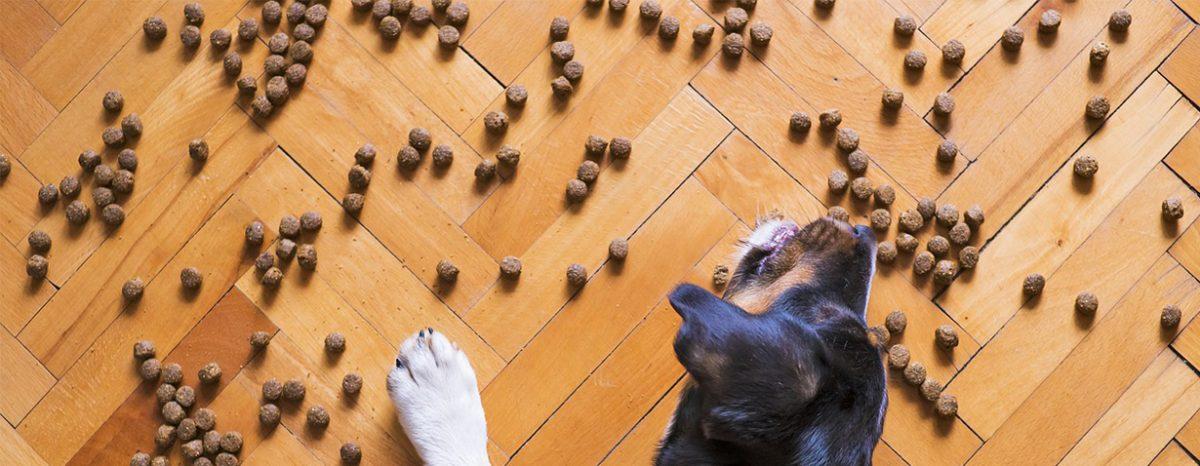 Der Futtercheck von CheckForPet und Hunde.de