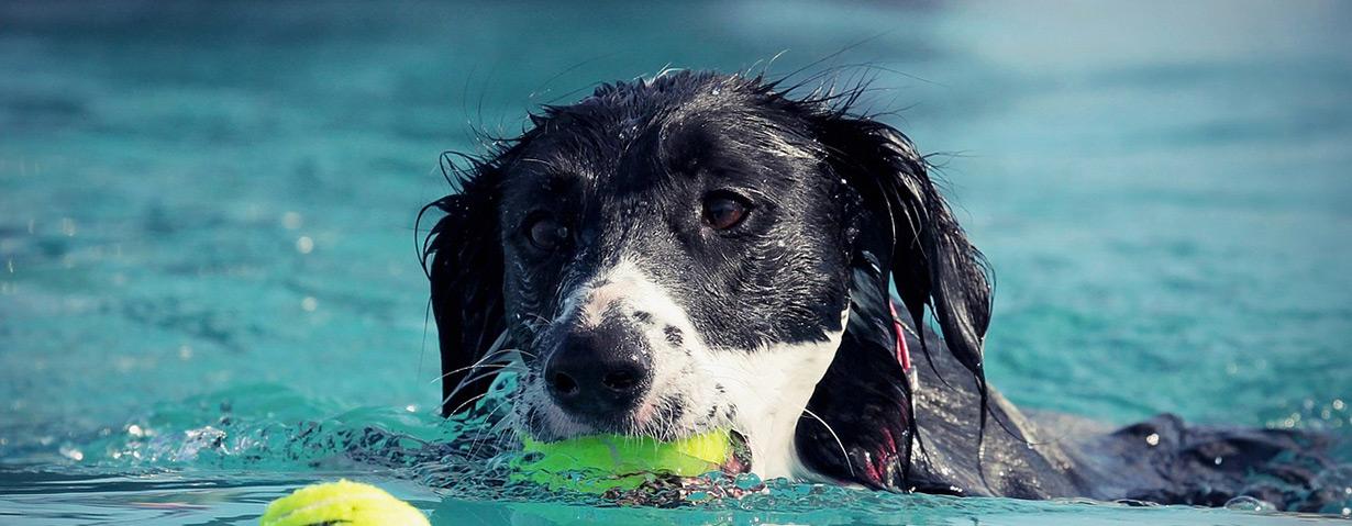 5 einfache Sportarten mit Hund