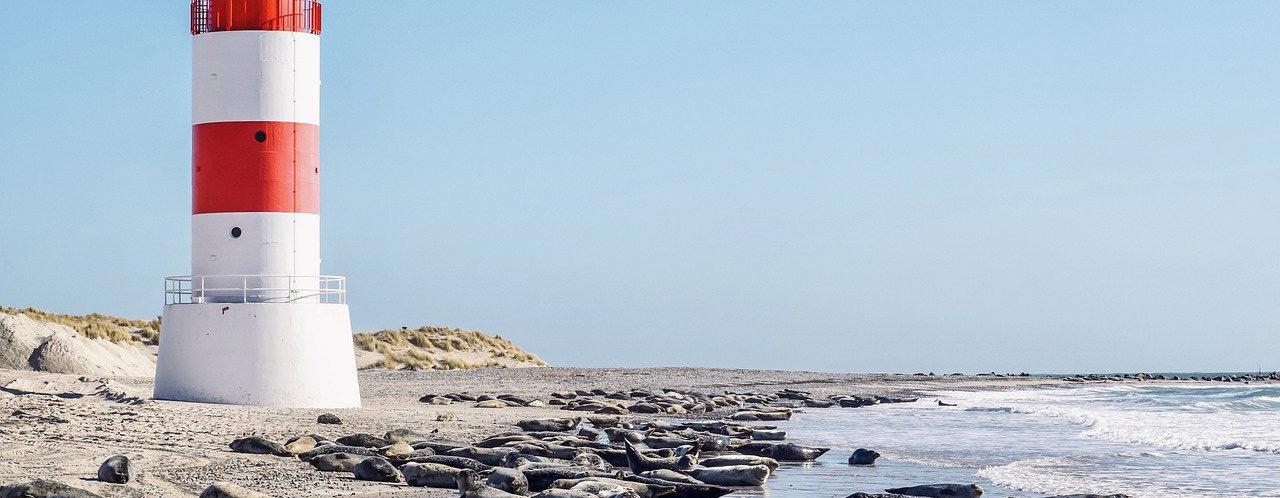 Urlaub mit Hund an Dänemarks Nordseeküste